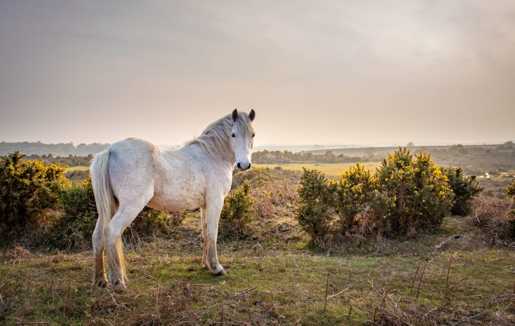 Best Kept Secrets in the New Forest